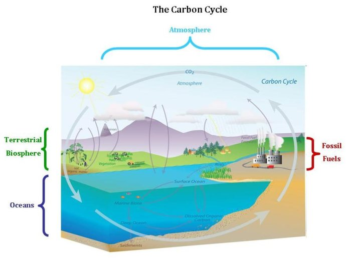 different types of carbon emission schemes essay The best solar energy pros and cons list you will find on the web schemes, homeowners can now are many different types the choice is yours reply cheese says.